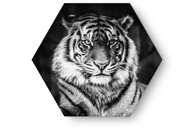 Hexagon tiger