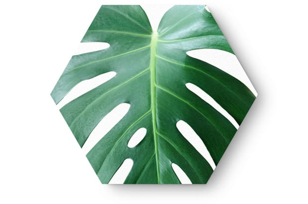 Hexagon monstera