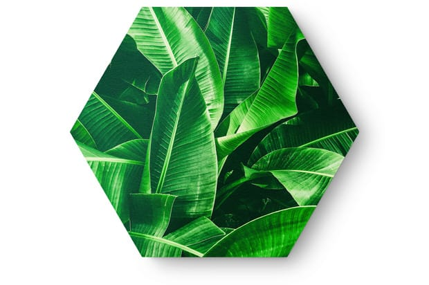 Hexagon banana leaf