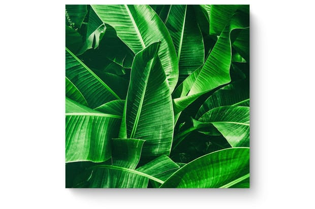 Square banana leaf